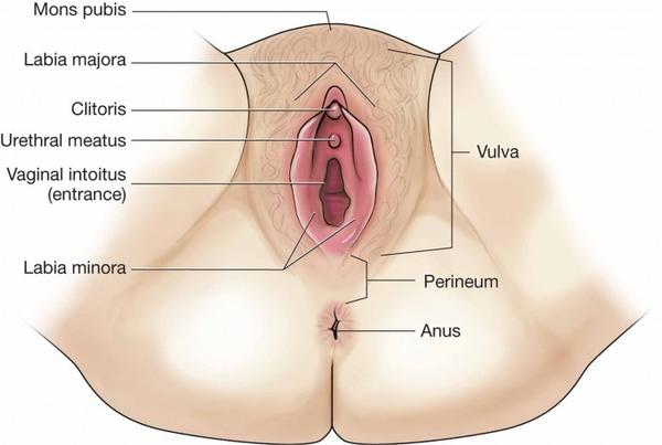 perineum Wise Birth Choices